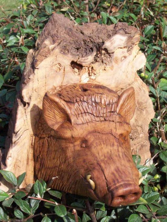 Sanglier du vieux chêne